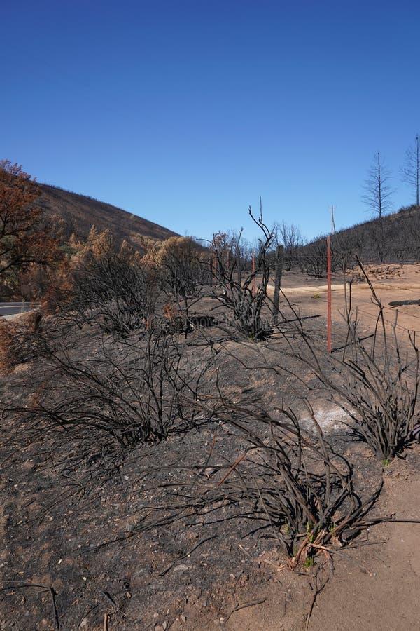 烘干森林野火烧焦和摧残的被烧的加利福尼亚山坡 免版税库存图片
