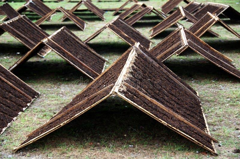 烘干淡满光印度尼西亚Srintil的烟草在阳光下 免版税图库摄影