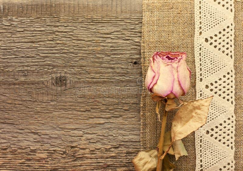 烘干玫瑰色在木背景 库存图片