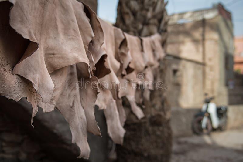 烘干的皮革垂悬在一条线在马拉喀什皮革厂 库存照片