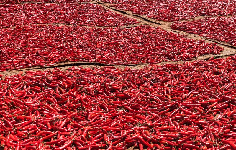 烘干的红辣椒在阳光下 免版税库存图片