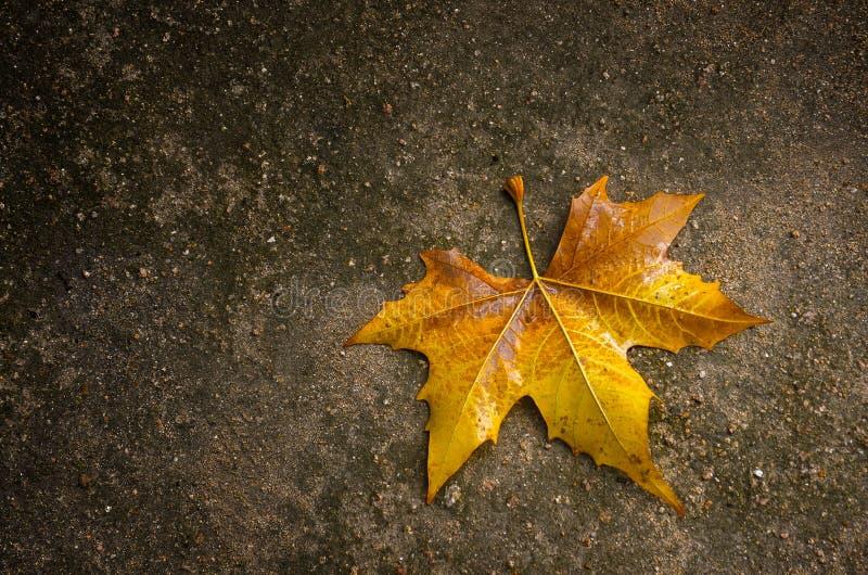 烘干秋天叶子黄色 库存图片