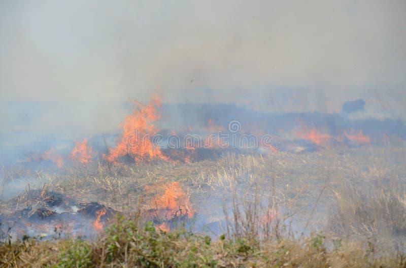 烟和火焰从农业学家发茬灼烧的米秸杆发生 库存照片