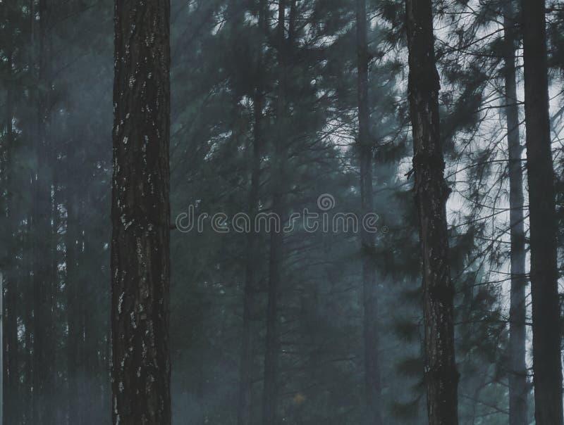 烟雾弥漫的森林 库存照片