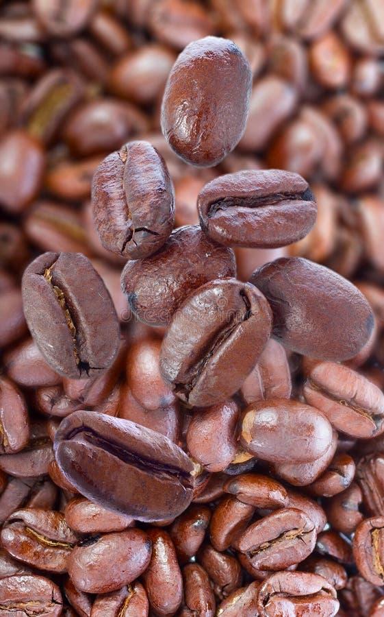 Download 烤咖啡豆 库存图片. 图片 包括有 食物, 特写镜头, 浓咖啡, 宏指令, 商务, 烧伤, 阿诺德, 生气勃勃 - 30335427
