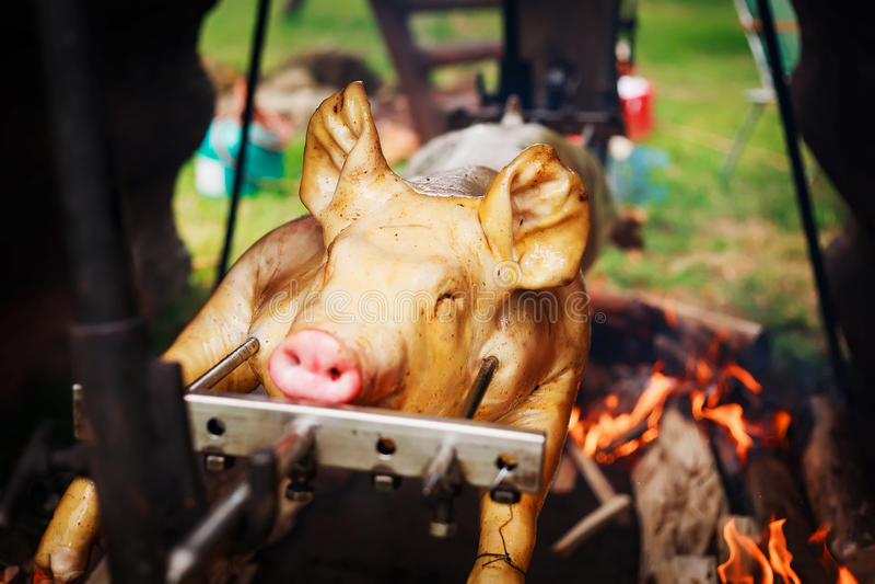 烤猪 库存图片