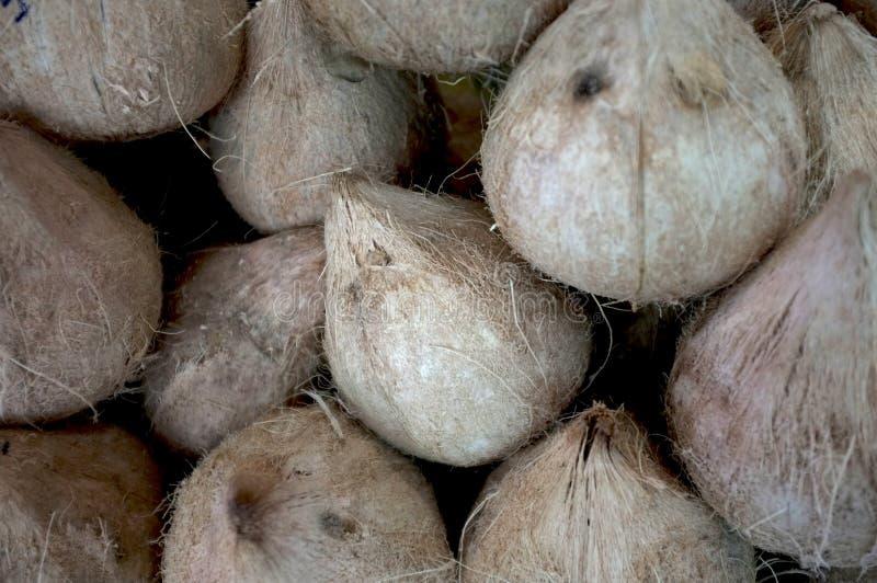 烤年轻甜椰子 库存照片