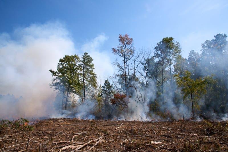 烧伤清楚的contolled剪切森林 免版税库存图片
