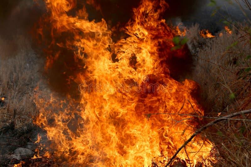 烧在森林里的夏天野火在Khon Kae乡区  库存照片