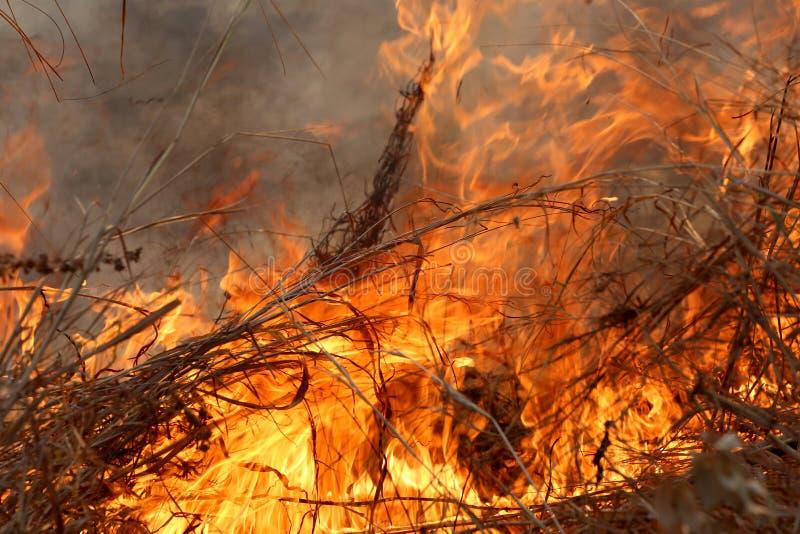 野火_烧在森林里的夏天野火在khon kaen,泰国乡区由于非常热天气