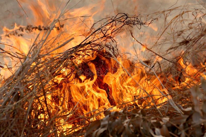 烧在森林里的夏天野火在Khon Kae乡区  免版税库存照片