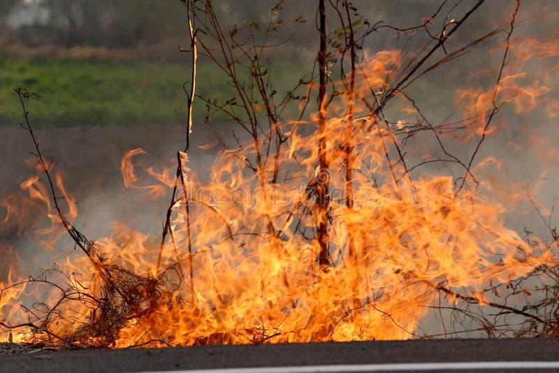 野火_烧在森林里的夏天野火在khon kae乡区. 热带, 天气.