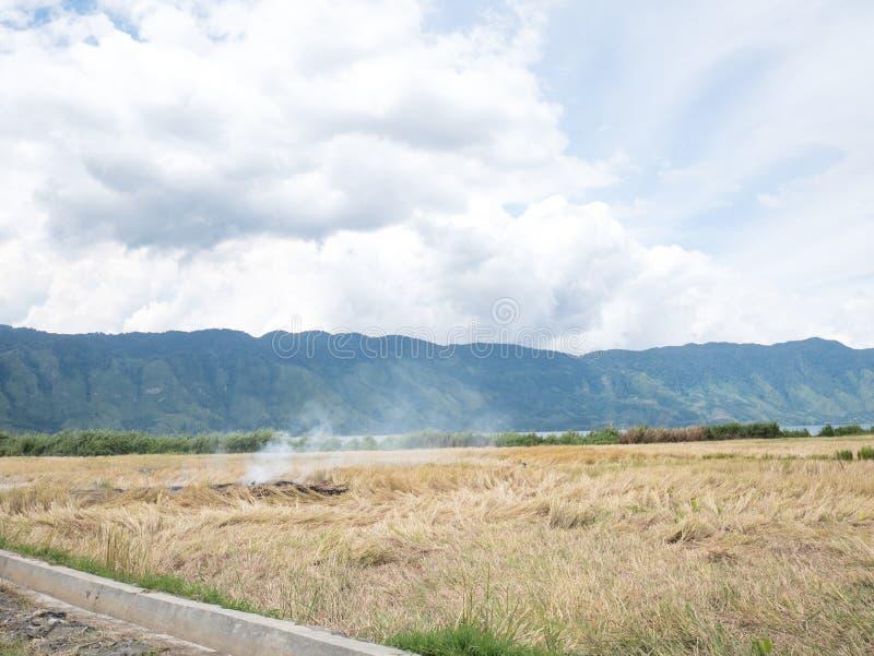 烧在稻农场的米秸杆开放领域影响了空气Pollut 库存照片