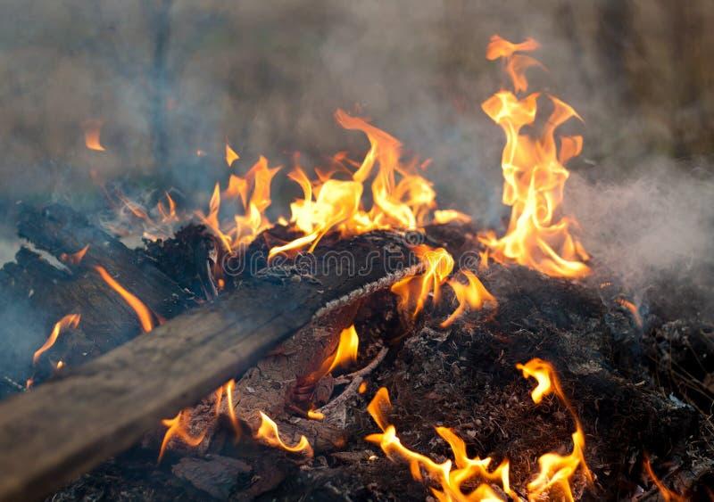 烧在篝火的板条 免版税库存照片