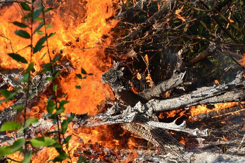 烧树的火火焰 免版税库存图片