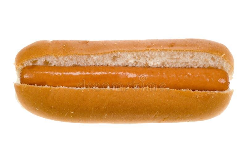 热小圆面包的狗 库存照片