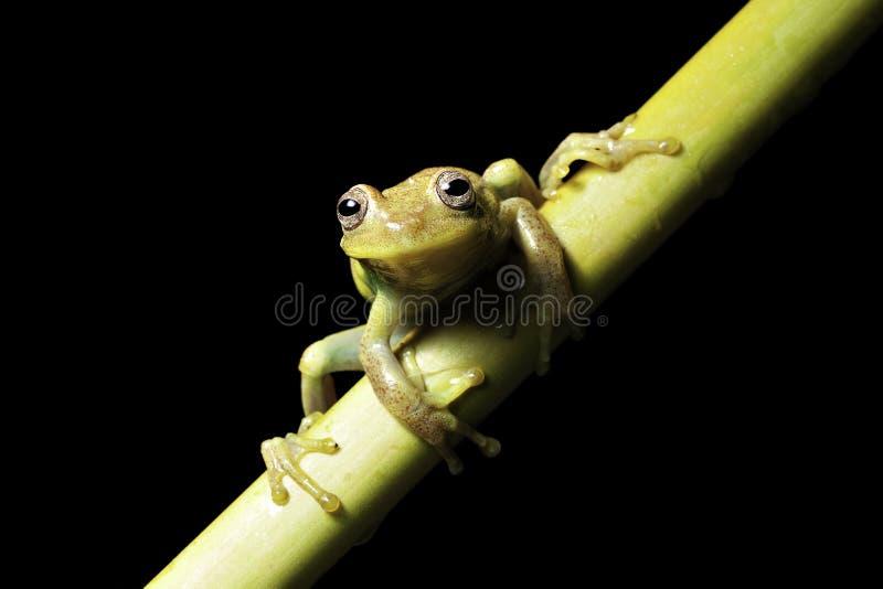 热带亚马逊两栖青蛙绿色密林的结构&# 免版税库存图片