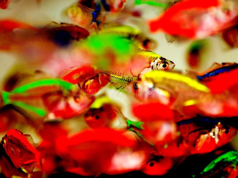 热带使目炫的鱼 库存图片