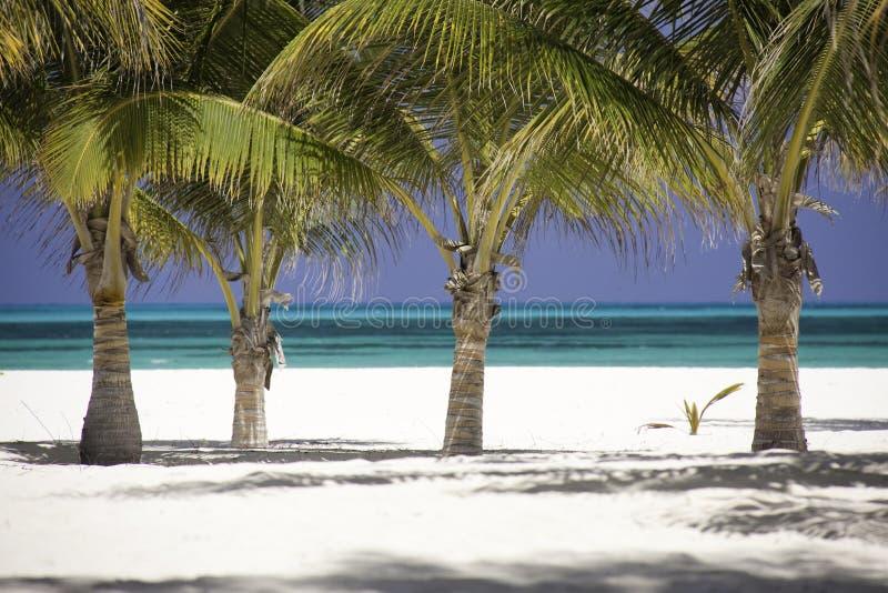 热带加勒比森林的棕榈树 免版税库存照片