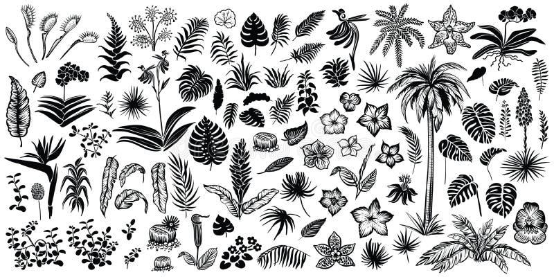 热带叶子和花、传染媒介线和剪影剪影 异乎寻常的植物群的大收藏 向量例证