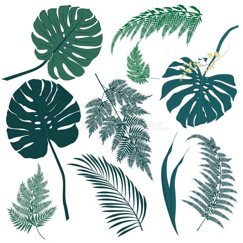 热带叶子和蕨元素在白色背景 库存例证