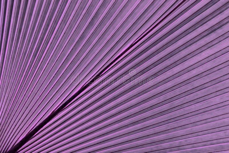 热带叶子棕榈 抽象自然样式纹理,异乎寻常的几何紫罗兰色背景 免版税图库摄影