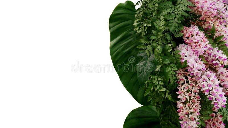 热带叶子植物蕨和爱树木的人绿色叶子有美丽的狐尾兰花异乎寻常的花的,植物布置 图库摄影