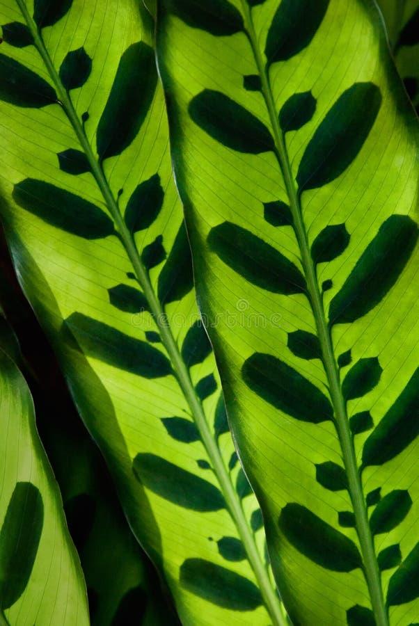 热带叶子模式 库存图片