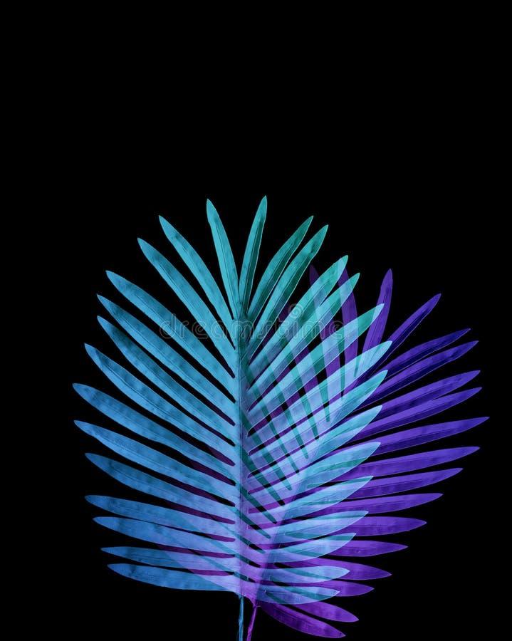 热带叶子的汇集,异乎寻常的颜色的叶子植物有黑空间背景 库存图片