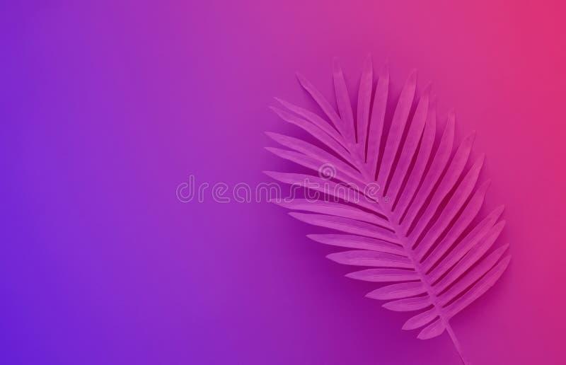 热带叶子的汇集,异乎寻常的颜色的叶子植物有黑空间背景 抽象叶子装饰 库存照片
