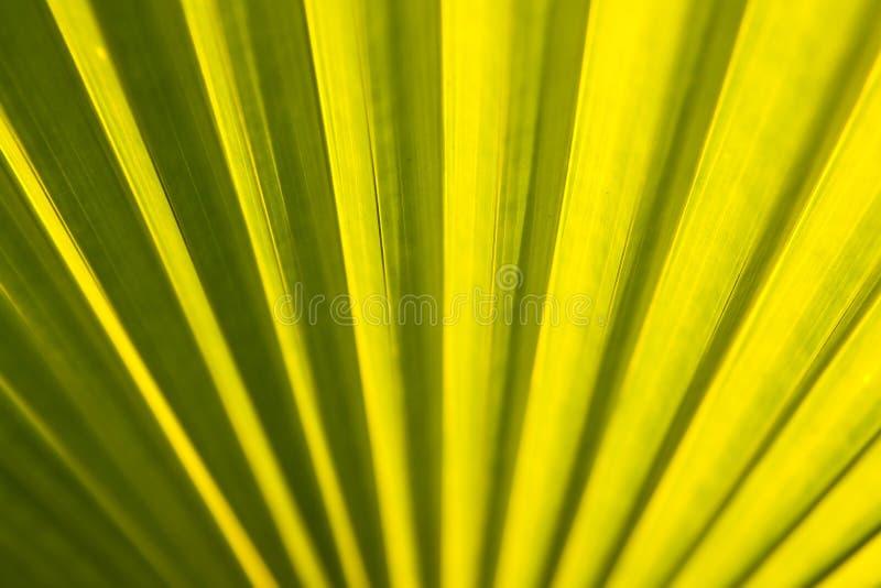 热带叶子的纹理 图库摄影