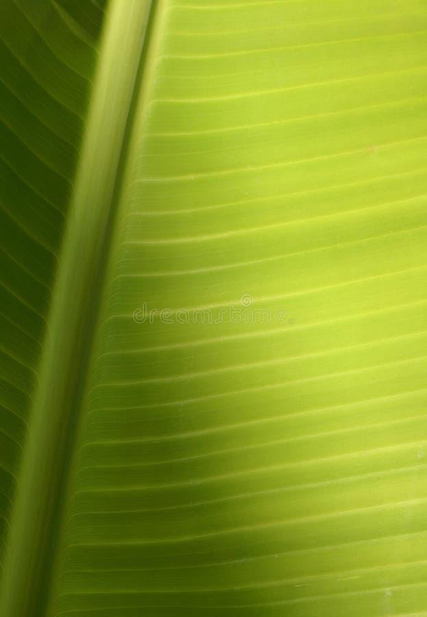 热带叶子的纹理 库存照片