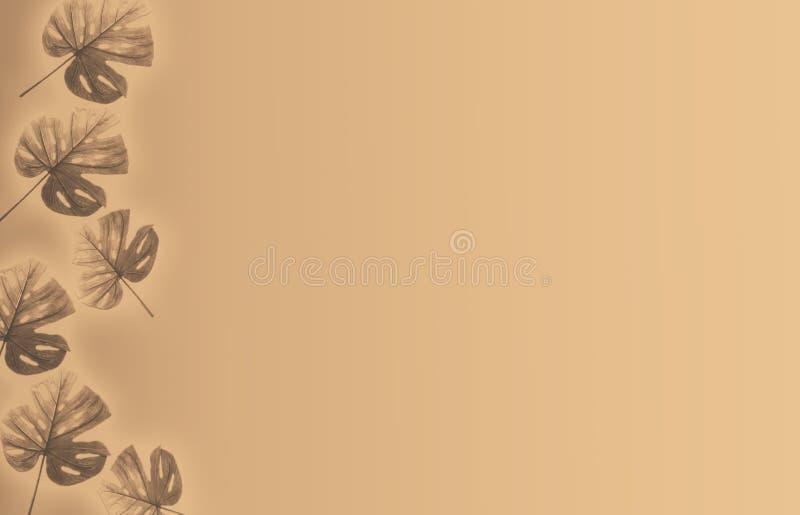 热带叶子背景乌贼属颜色,文本的空间 免版税库存照片