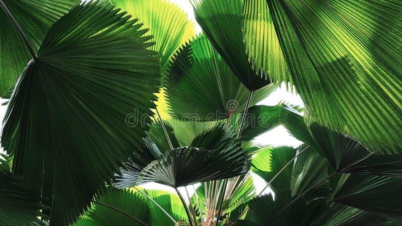 热带叶子雨林爱好者棕榈叶样式,抽象绿色自然背景 库存图片