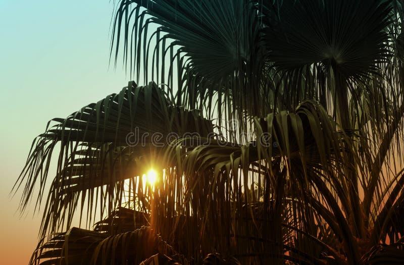 热带叶背景夕阳照下的棕榈树剪影 图库摄影