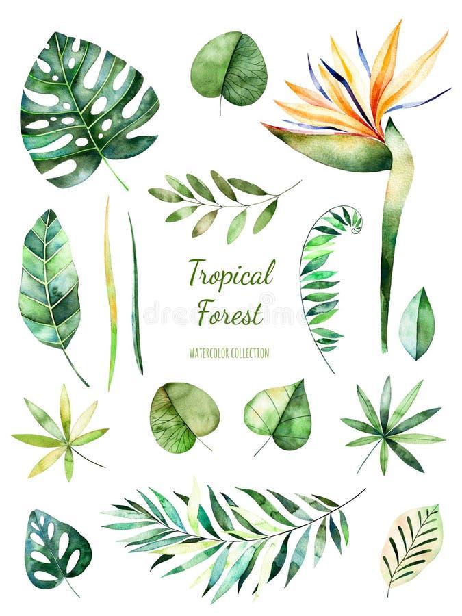 热带叶茂盛收藏 手画水彩花卉元素 水彩叶子,分支,花 向量例证