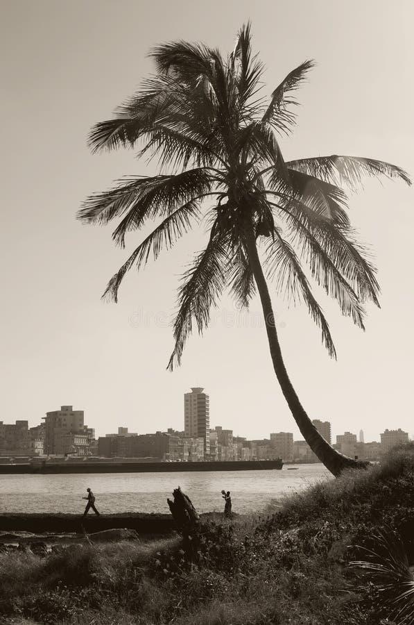 热带哈瓦那的地平线 免版税图库摄影