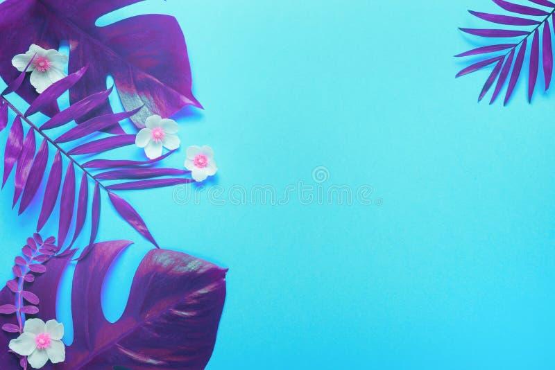 热带在充满活力的大胆的梯度全息照相的颜色的叶子Monstera和棕榈 概念艺术 最小的超现实主义 库存照片