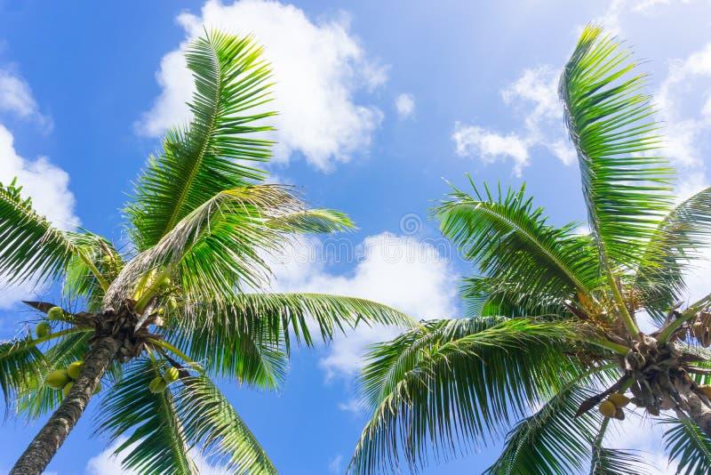 海洋热带棕榈树和叶状体,场面和天空邢台工天建筑设计图片