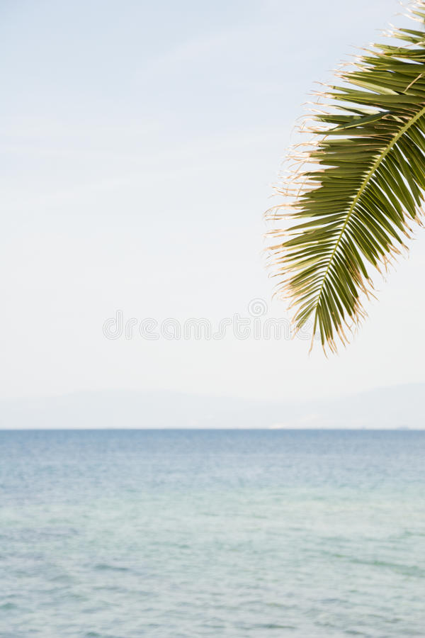 热带夏天明信片 库存图片