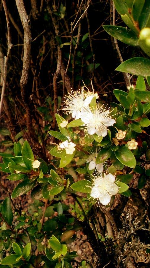 热带夏天植物 库存图片