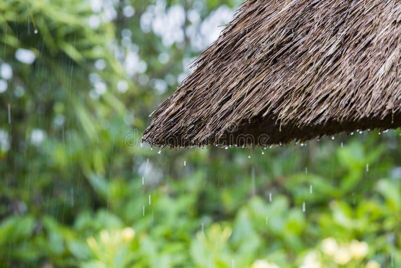 热带夏天雨落的大雨在庭院里下降跌倒在秸杆屋顶 海岛巴厘岛, Ubud,印度尼西亚 图库摄影