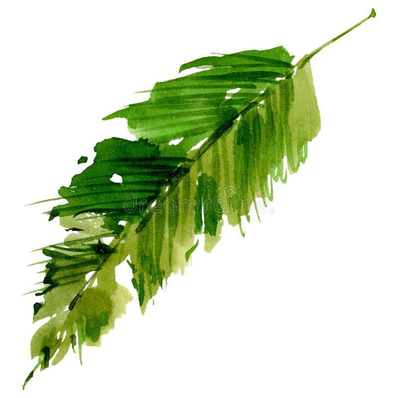 热带夏威夷在水彩样式把棕榈树留在被隔绝 库存例证