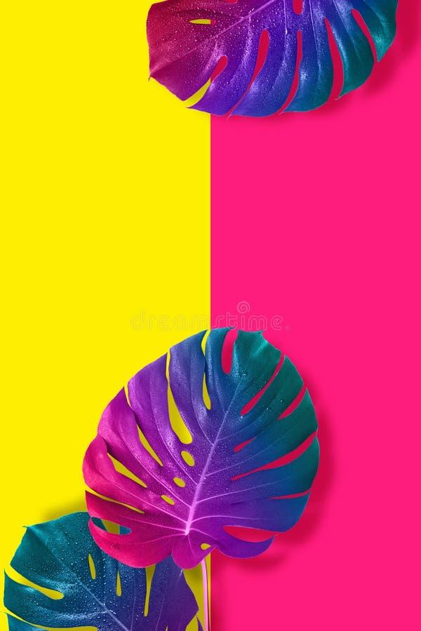 热带多彩多姿的梯度妖怪叶子 皇族释放例证