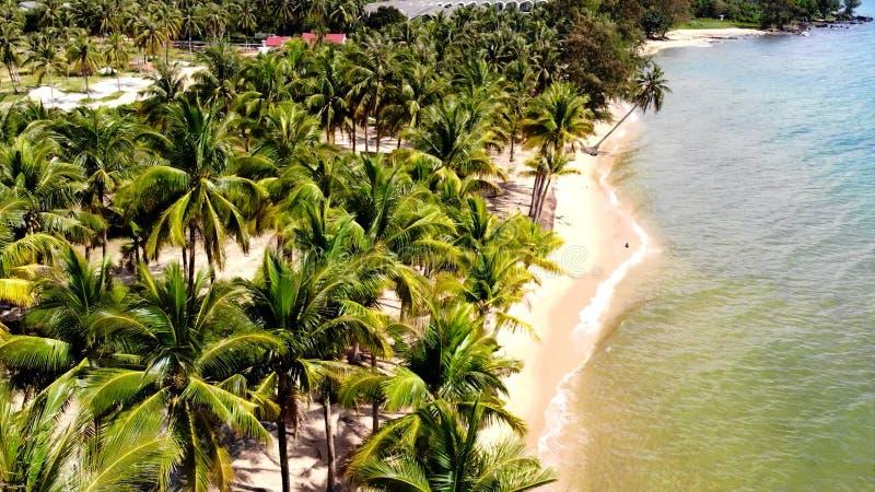 热带大洋洲可爱的海岸  图库摄影
