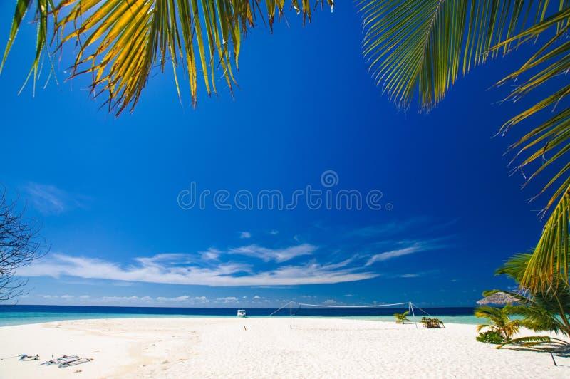 热带天堂:美丽的景色通过在一个白色沙子海滩的绿色棕榈叶子在马尔代夫 库存图片