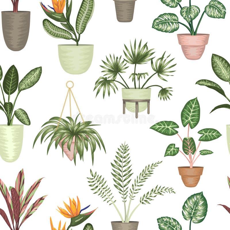 热带室内植物的传染媒介无缝的样式在白色背景隔绝的罐的 皇族释放例证