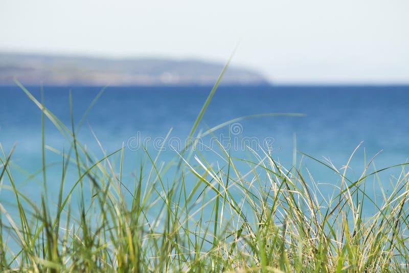 热带密执安在与海滩沙丘草情感剧烈的梦想概念的水色蓝色颜色浇灌 Copyspace 库存图片