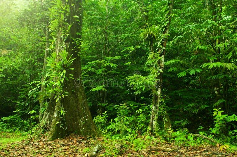 热带密林横向 库存图片