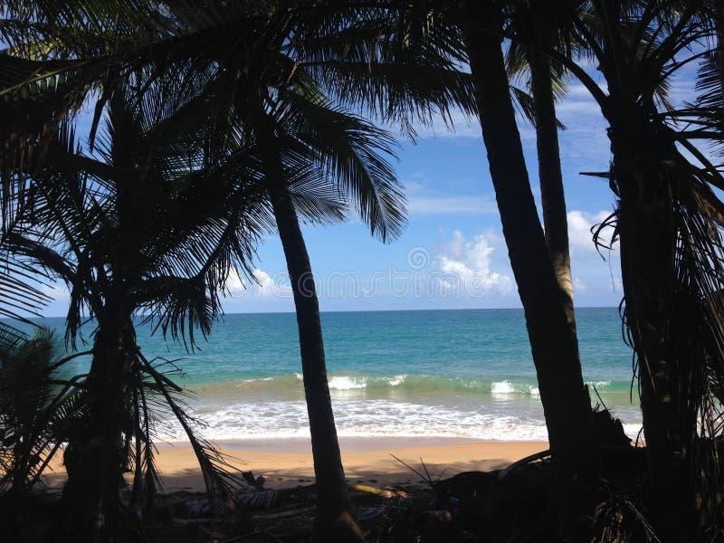 热带寿命 免版税库存图片